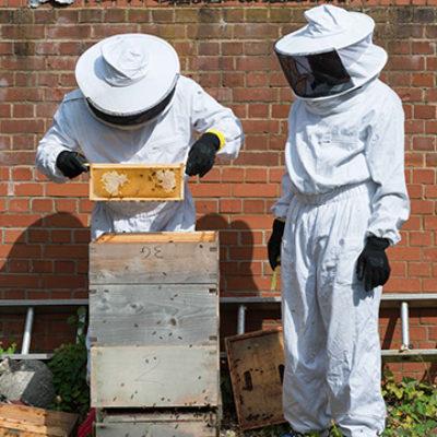 Kairos beekeepers