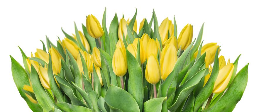 Kairos-Bouquet