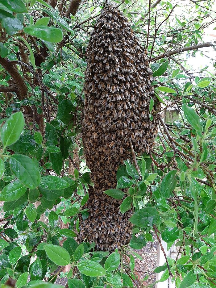 Kairos bees swarming