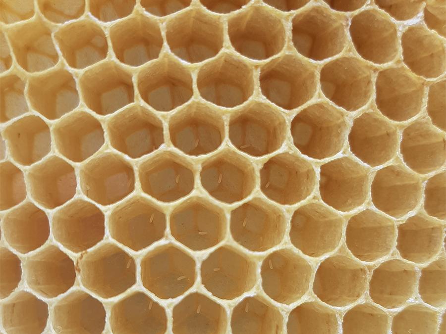 Kairos Community Trust beekeepers
